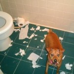 Athena vs. Toilet paper