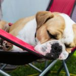 puppy sleeping in chair outside