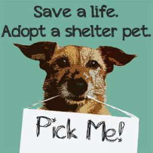 Adopt a shelter dog. Pick me.